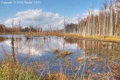 First HDR (CritterQueen) Tags: autumn fall nature scenery swamp wetlands hdr deadtrees naturesfinest betterthangood critterqueen
