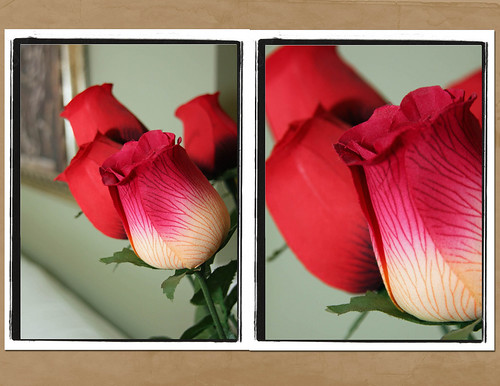 Roses by Marleh