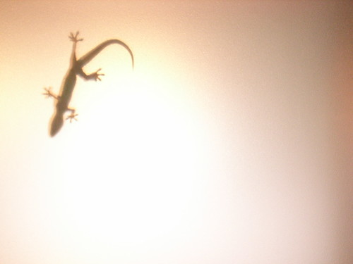 gecko (by a-ting)