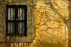 (Fran-cesca) Tags: roma window ombra finestra luce rami vene incrocididestini quellochesiamoechecilega