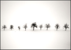 the memory of trees... (Hausstaubmilbe) Tags: bw white snow black tree lumix live line panasonic g1 platinumphoto blackwhiteaward theunforgettablepictures creattivit panasoniclumixg1 weeklygemsadminspics halloffamegroup updatecollection
