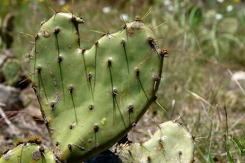 Cactus Love Note