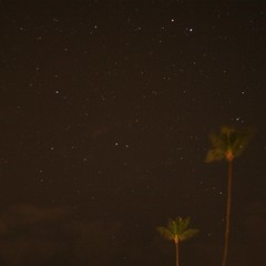 Palm trees kept company by a star filled sky.