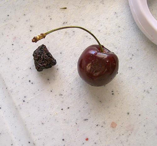 drying cherries 6