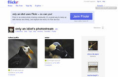 only an idiot uses Flickr - so can you! (eyebex) Tags: birds deleted7 screenshot idiot flickr you saved10 can an only puffin savedbythedeltemeuncensoredgroup eider 107 uses