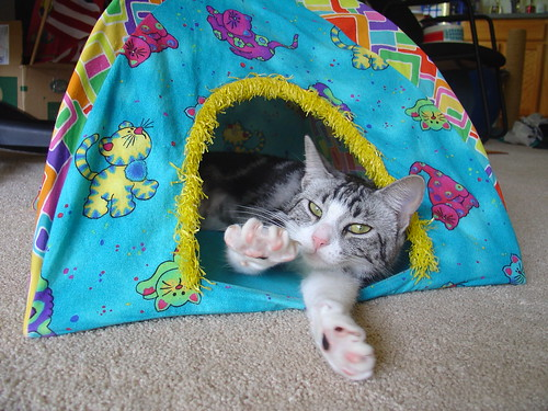 Mittens Tent Stretch