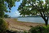 Brownsea Island Beach & Tree (Paul *) Tags: sea tree beach island harbour panasonic national dorset trust british poole brownsea seac lx3 britishseascapes