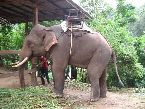 Thailande2 135