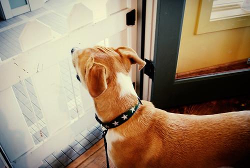 pablo's new collar