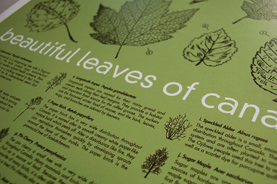beautiful leaves of canada by you.