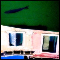 There is a fish in Venice (Shima Hitotsu) Tags: venice fish reflections venise venezia canale neumann carlobenevento