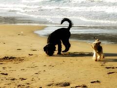 autumn beach (florenarocena) Tags: dogs perros hunde chiens txakurrak