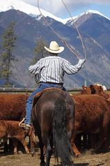 Branding 2010-38 (KansasA) Tags: ranch horses horse cowboy calf branding calves