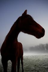 Pride of horse (Damien Walker) Tags: delete9 delete5 delete2 delete6 delete7 save3 delete8 delete3 delete delete4 save save2 deletedbythehotboxuncensoredgroup
