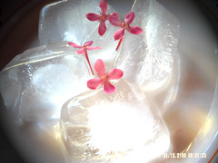 Ice & flower. (Isabelle Macdo) Tags: flores flower gelo glass smile sorriso mo