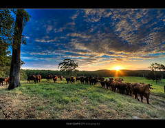 On the farm. ([ Kane ]) Tags: blue light sunset sky sun green grass yellow clouds cows farm explore rays kane hdr gledhill kanegledhill vosplusbellesphotos humanhabits kanegledhillphotography