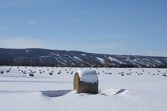 Hay! (Pistol Dave) Tags: winter snow field hay bales skihill