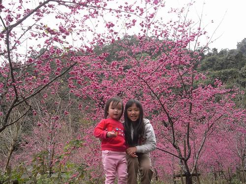 你拍攝的 4姊妹與櫻花。