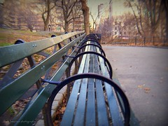 Bench in Central Park (lynne_b) Tags: park trees winter light urban newyork leaves fence buildings bench arch path centralpark seat lamppost archives nationalhistoriclandmark unseasonablywarm takenwithmyfirstdigitalcamer
