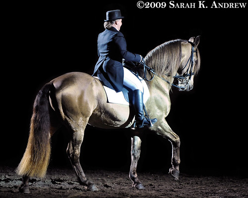Gold Champagne Horse Horse Stallion Champagne