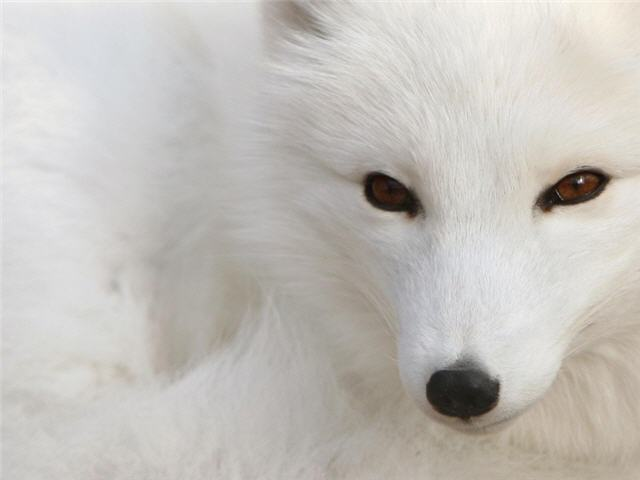 생동감 넘치는 야생동물 배경화면