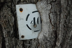 Overgrown (Loreleianne) Tags: tree texture nature overgrown sign montreal number bark ilesthelene thechallengegame challengegamewinner thechallengefactory