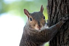 WHAT ?!?!? (anka.anka28) Tags: trip usa newjersey squirrel nj explore wiewiórka oceangrove podróż explored 450d canon450d usa2009
