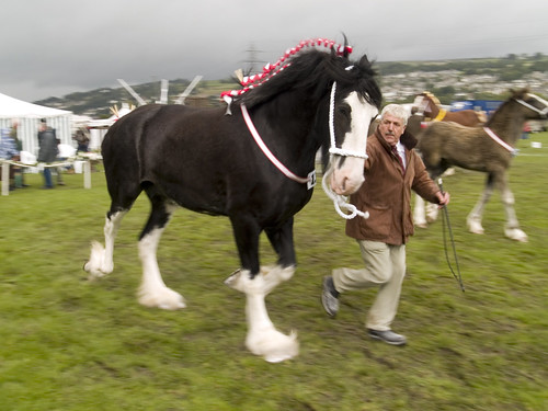Shire Horse Show - On The Run