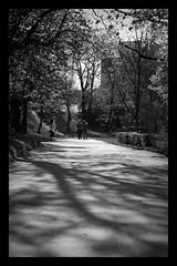 surroundeds (auberk) Tags: park shadow bw white black tree lights couple republic czech prague praha zizkov