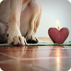 They (dangeri.) Tags: dog pet love topf25 loving waiting labrador candle heart adorable dude perro devotion athome paws doc doggie perrito loyalty loveatfirstsight petlover dogpersonality abigfave thelittledoglaughed betogether topf25faves heismylove pet100 ilovepoetry doggielife miocucciolo canonpowershotsx1is magicunicornverybest magicunicornmasterpiece everyonelovesadogknows theresnothingilovesomuch ourdailylife myyellowlabrador thelittledoglaughedfirstplacecontestwinnerfor49