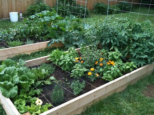 Gardening 2011