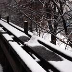 12 - 05 janvier 2009 Maisons-Alfort Jour de neige = Snowy day Promenade au bord de la Marne Petit bonhomme de neige = Little snowman thumbnail
