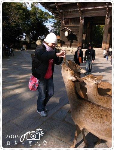 奈良的鹿 (6)