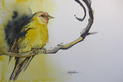 yellow (Jennifer Kraska) Tags: art birds yellow watercolor jennifer ballpoint kraska