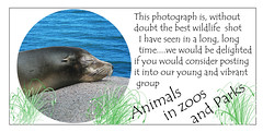 Animals in Zoos & Parks