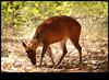 xDSC_2151 copy (sajeshjose) Tags: camp wildlife bangalore sash bannerghatta sajesh bennerghatta ireboot