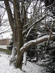 Delph Snow 12
