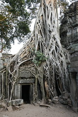 Tomb Raider Temple at Angkor