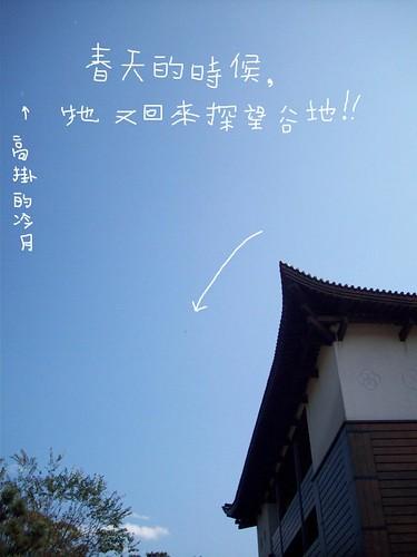你拍攝的 大冠鷲的天空。