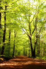 Bois de Seraing (Daniel Schoumakers) Tags: trees nature landscape daniel arbres paysage ubn fagussylvatica htre anawesomeshot impressedbeauty theperfectphotographer goldstaraward spiritofphotography schoumakers naturescreations greencleanfutureplanet savebeautifulearth