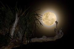 AUUUUUUUUUUUUUUUUUUUUU!!! (Luiz C. Salama) Tags: moon photoshop canon interestingness nightshot explorer explore noturna midnight lua 500 destaque interessantes noturnas sinistro mistério duplaexposição meianoite 100400l mywinners duetos eos40d afterthesun depoisdosol