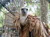 Vulture look (FOlmeda) Tags: naturaleza bird look reja zoo reflex amazing natural olympus ave pluma vulture lovely mirada marron buitre leonado brwn rapaz e500 carroña carroñero