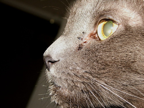 Closeup of our cat Merlin
