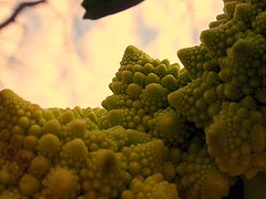 broccoli in LSD (fluxahedra) Tags: green fractals trippy psychedelic romanescobroccoli selfsimilarity