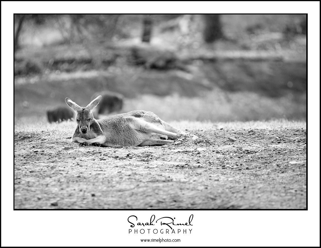 feb zoo 07