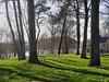 Spring fantasy (kezwan) Tags: tree göteborg spring sweden vår kezwan