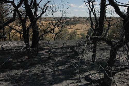Lestat del bosc després del foc