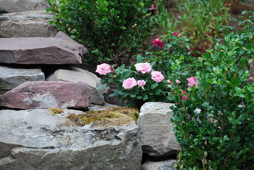 Terrace Garden Roses
