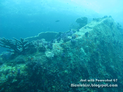 corals on wreck