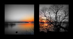 Picnik Collage (Kirsten M Lentoft) Tags: lake reflection tree art water collage denmark weed silhouettes sunsets chapeau magical selectivefocus fineartphotos arresø anawesomeshot flickrdiamond betterthangood thesuperbmasterpiece kirstenmlentoft sailsevenseas coppercloudsilvernsun fotokonkurrencerdkuge342009